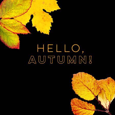Hello, Autumn design template with vibrant yellow and orange autumn leaves on a black background with copy space 写真素材