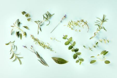 Culinary aromatic herbs, shot from the top on a teal blue background, cooking pattern Standard-Bild