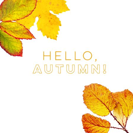 Hello, Autumn design template with vibrant yellow and orange autumn leaves on a white background with a place for text 写真素材