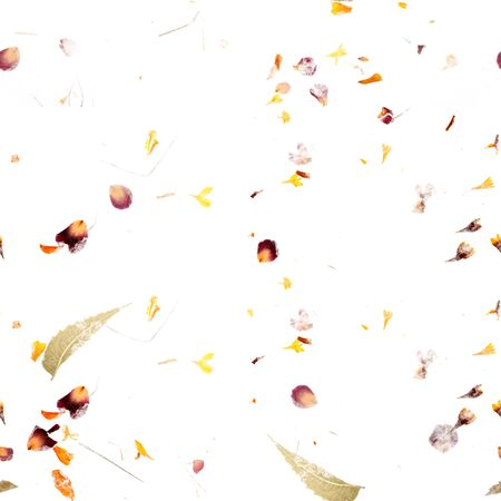 Seamless autumn pattern. A repeat print with scattered dry leaves and petals on a white background