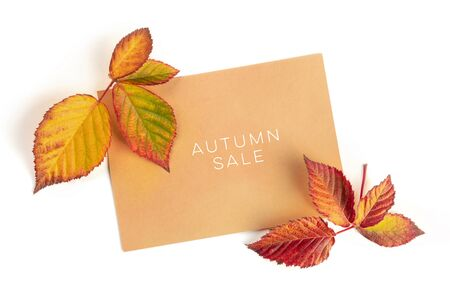 Autum Sale. Discount banner or flyer design template with vibrant autumn leaves, overhead shot on a white background with copy space Stock Photo