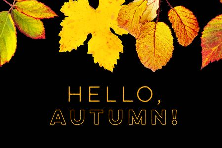 Hello, Autumn design template with vibrant yellow and orange autumn leaves on a black background 写真素材