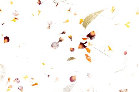 Abstract autumn texture. Scattered dry leaves and petals on a white background