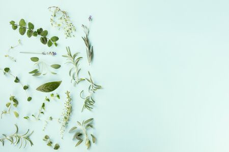 Culinary aromatic herbs, shot from the top on a teal blue background with copy space