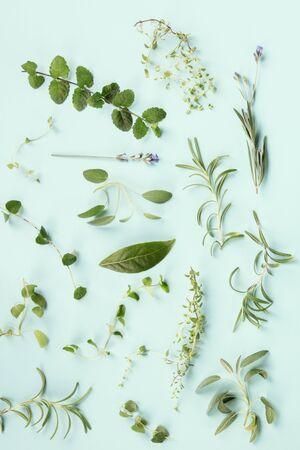 Erbe aromatiche culinarie su sfondo blu verde acqua, schema di cottura, composizione piatta