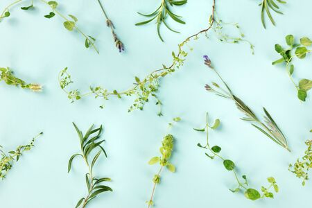 The herbs of Provence. Rosemary, oregano, thyme, lavender, and marjoram, shot from above on a blue background Stock fotó