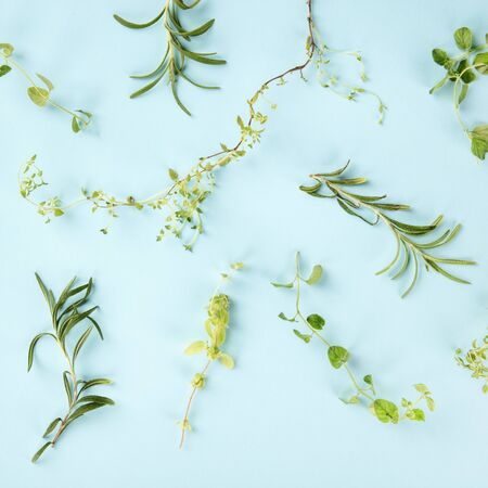 The herbs of Provence. Rosemary, oregano, thyme, and marjoram, overhead square shot on a blue background