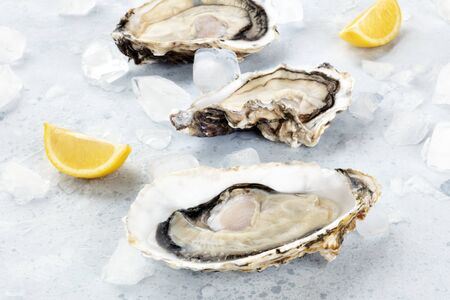 Fresh raw oysters with lemon slices on ice, a close-up shot
