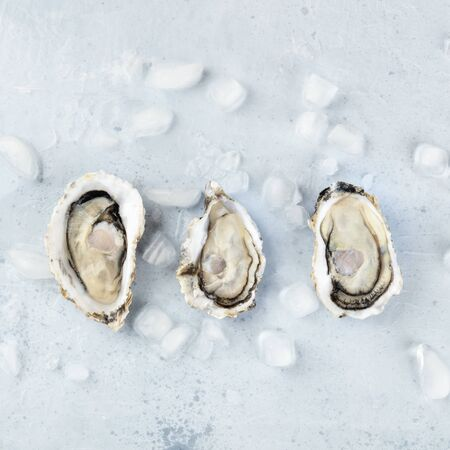 Fresh raw oysters on ice, square overhead shot with a place for text 写真素材