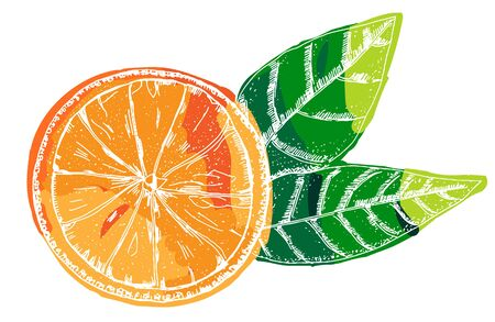 Vector orange, a hand-drawn illustration on a white background, a citrus fruit with green leaves icon