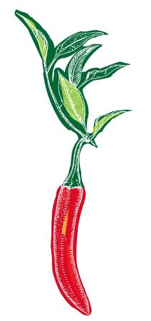 Vector red chili pepper, a hand-drawn illustration on a white background
