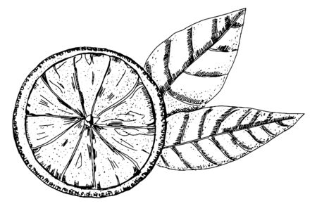 Vector orange drawing in pen and ink on a white background, a hand drawn sketch