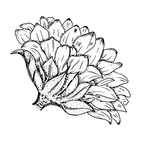 Vector sunflower, black and white ink drawing, isolated on a white background, suitable for hot foil stamping