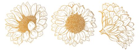 Vector sunflowers, hand drawn set, design elements suitable for hot foil stamping