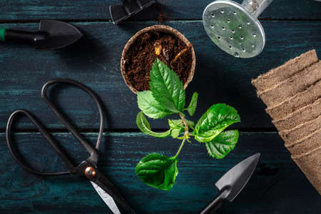 Repotting a plant. Gardening tools and a small plant, shot from the top Reklamní fotografie