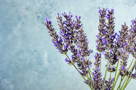 Lavender flower bouquet on a blue background with copy space, a bunch of lavandula plants, fresh and fragrant 版權商用圖片
