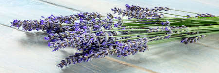 Lavender flower panorama on a rustic wooden background, a bunch of lavandula plants, a panoramic banner