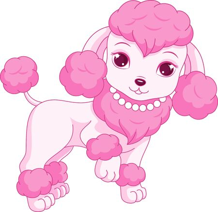 glamorous: Glamorous poodle, the lovely pet for a ladies, fashionista
