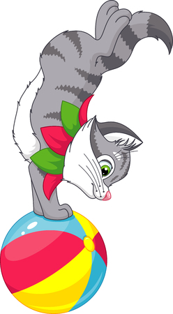 grey cat: Cat does a trick on the ball.