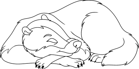 Schlafender Bär Malvorlage Lizenzfrei Nutzbare Vektorgrafiken Clip