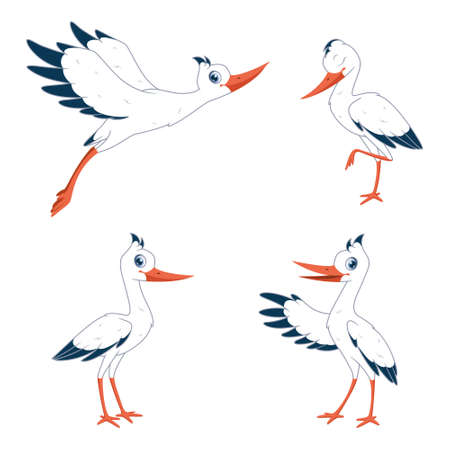 Cartoon set of storks in different poses. Vector illustration of storks on white background