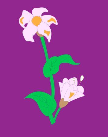 Flower of pink  Illustration
