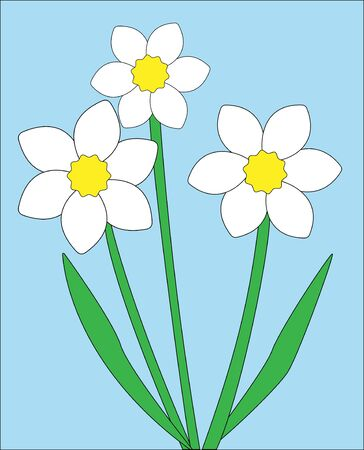 Three flowers of a narcissus with green stalks on a blue background.