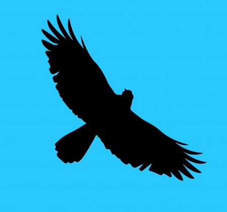 Silhouette of the bird of prey soaring in the blue sky