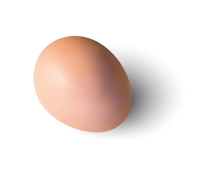 Egg realistic orange on a white background.