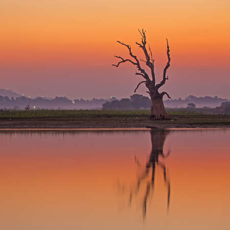 After sunset, Silhouette dead tree photo