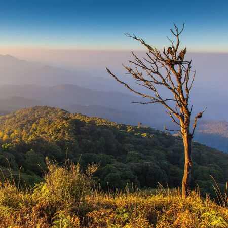 Dry tree on Mountain view take form Inthanon national park, Thailand Stock Photo - 17840922