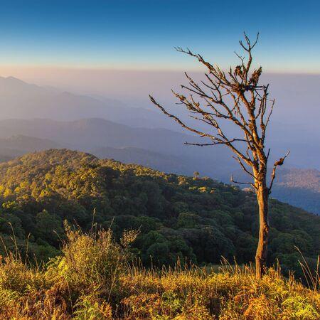 Dry tree on Mountain view take form Inthanon national park, Thailand Stock Photo - 17840922
