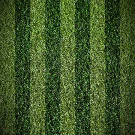 grass field background  photo