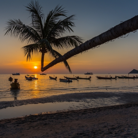 Palm tree over lagoon with boats at sunset  Koh Tao island, Thailand