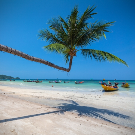 koh tao: Tropical White Sand Beach with Coconut Trees   Koh Tao island, Thailand