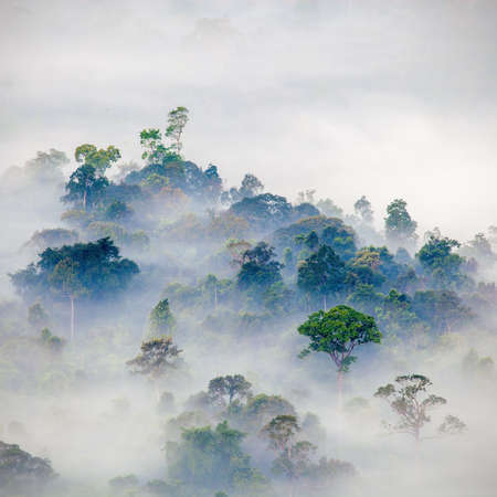 forest  and fog in the morning, Thailand  photo