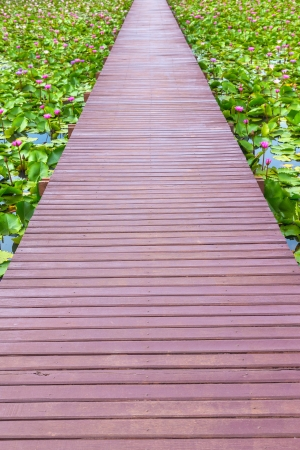 wooden walk way on lotus pond photo