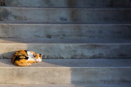 cat sleeping on stair
