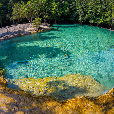 deep roots: Emerald Pool is unseen pool in mangrove forest at Krabi in Thailand