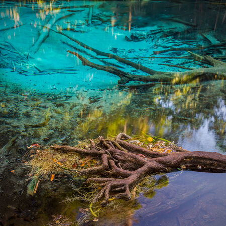 Emerald Pool is unseen pool in mangrove forest at Krabi in Thailand   photo