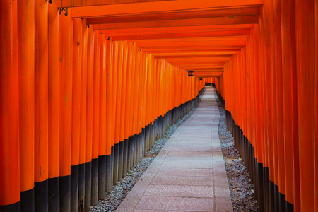 Fushimi Inari Shrine on in Kyoto, Japan. Thousands of torii gates straddle a network of trails. A walking path leads through a tunnel of torii photo