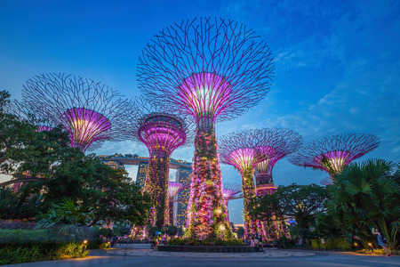 SINGAPORE-AUG 31,2014: Night view of The Supertree Grove at Gardens by the Bay in Singapore. Spanning 101 hectares, and five-minute walk from Bayfront MRT Station.