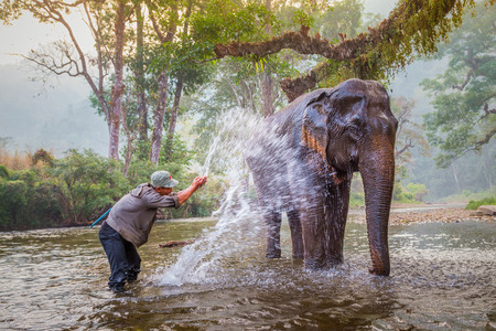 KANCHANABURI, THAILAND - JAN. 30, 2015: Unidentified mahout bathe and clean the elephants in the the river, in Sangkhlaburi, Kanchanaburi, Thailand.