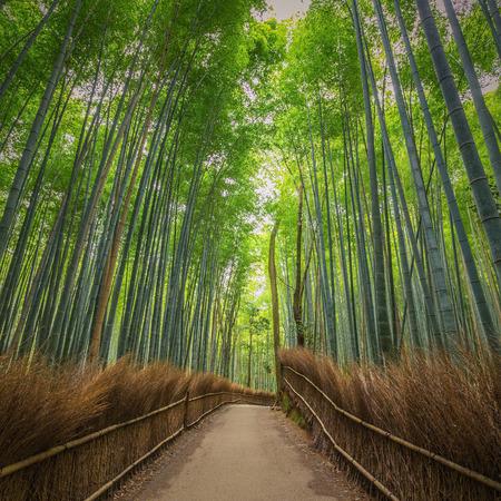 Bamboo Forest in Japan, Arashiyama, Kyoto