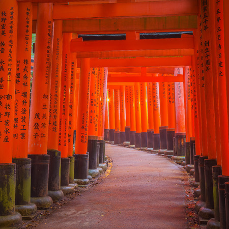 straddle: Fushimi Inari Shrine in Kyoto, Japan. Thousands of torii gates straddle a network of trails. A walking path leads through a tunnel of torii