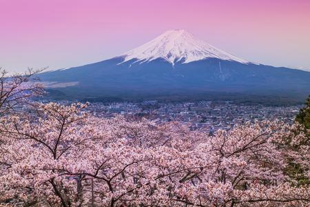 春、桜の花桜の山富士