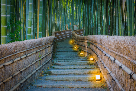 Percorso di foresta di bambù, Arashiyama, Kyoto, Giappone Archivio Fotografico