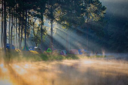 In the morning, Pang Ung Forestry Plantations, Maehongson Province, North of Thailand Imagens
