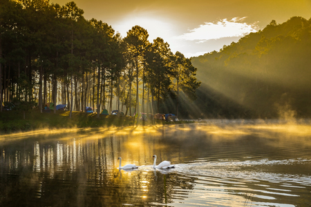 In the morning, Pang Ung Forestry Plantations is a tourist place where people come to vacation in the winter. Maehongson Province, North of Thailand Stock Photo