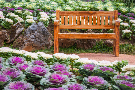 wood chair in the cabbage ornamental garden of angkhang thailand. Imagens